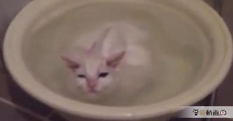 『お前は私が見えるのか?』お風呂と一体になっている猫