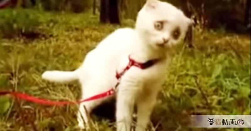突然睨みつける猫さんの豹変ぶりに恐怖より……笑ってしまいます(笑)