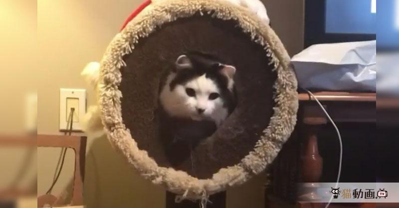 穴に入れなかった猫ちゃんのオシリが……たまりません(*ノ∀`*)