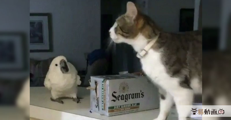 きっ……消えた??? ジャンプして消えた猫ちゃんに驚く鳥さん