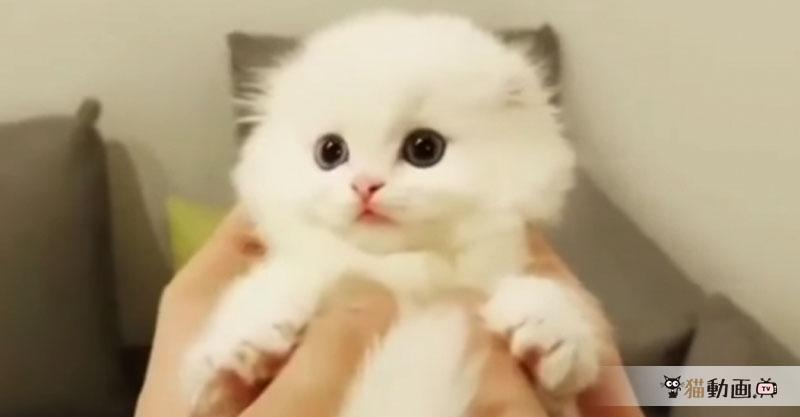 全てが可愛すぎるモフモフ子猫ちゃんに昇天しそうです(*´∀`*)