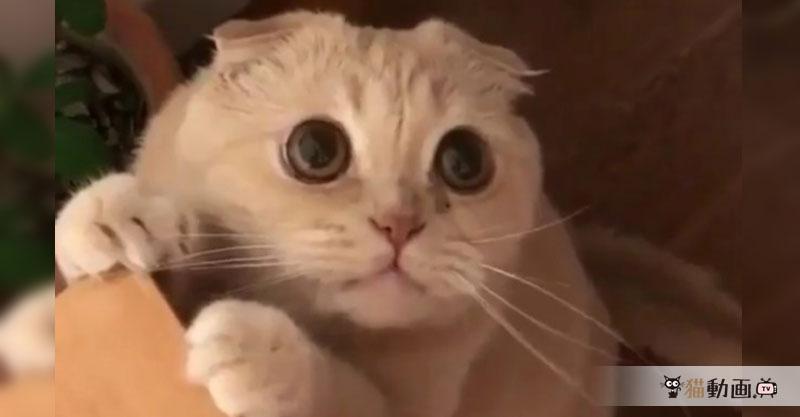 大きな瞳に吸い込まれそう(*ノ∀`*) おもちゃを遠慮がちに触る猫ちゃん