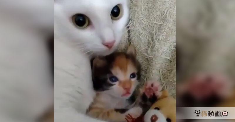 子猫とぬいぐるみを守るように抱き込む母猫、すべてが癒されます💕