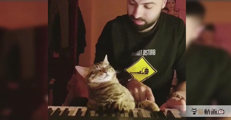 猫さんと飼い主さんの素敵なピアノ連弾をお聞きください( ´艸`)