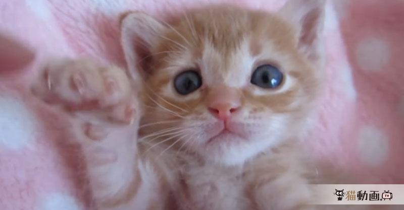 ツンツンにじゃれてたら……眠くなっちゃった子猫ちゃんの寝顔が可愛い💕