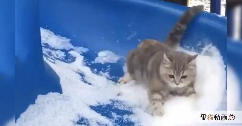 もの凄いスピードで滑り降りるサーキットの猫! 目を離さないでくださいっ