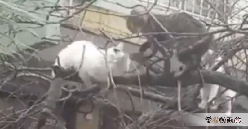 樹から落ちそうになった猫さん達の反射神経はさすがです!