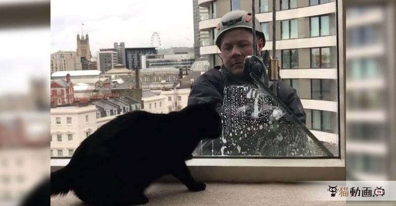 窓拭きワイパーで遊ばれる黒猫ちゃんと遊ばせるお兄さんの日常