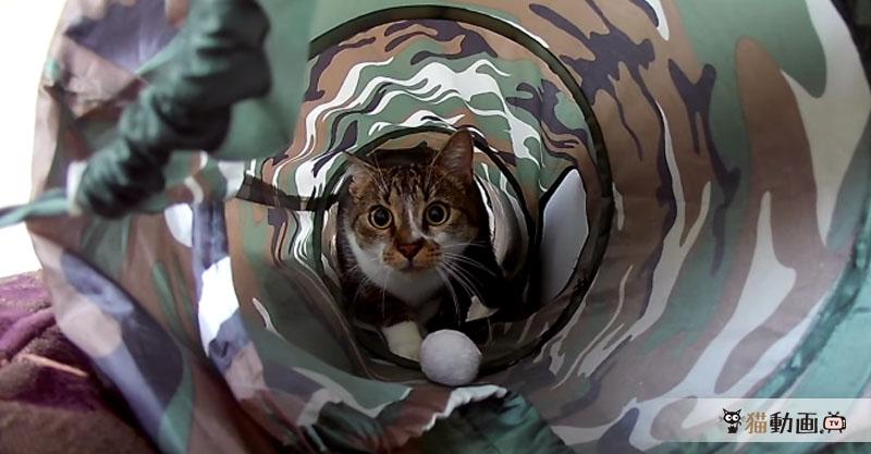 猫に狙われた獲物の気持ちはこんな感じかしら?