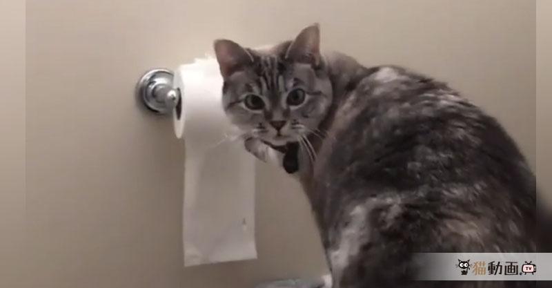 こんなに可愛い猫さんが、こんなヒドイことをするなんて……(≧∀≦)