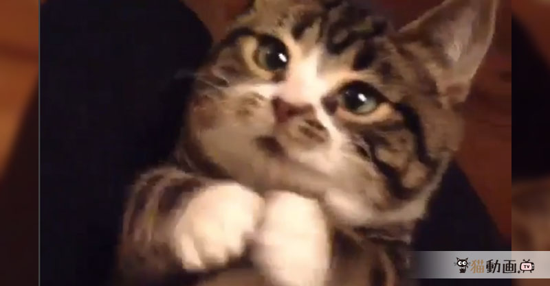 どこから見てもきゃわわ💕な猫さんにキュンとしちゃいます
