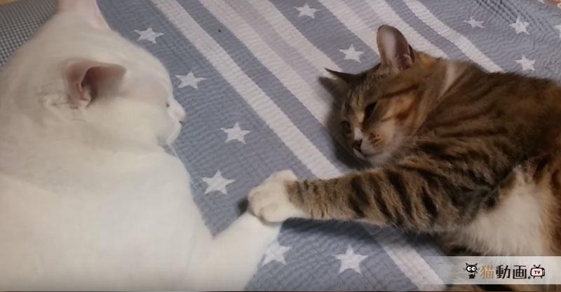 私が眠るまでその手を離さないでにゃ……寝るときは手を繋ぐ猫さん💕