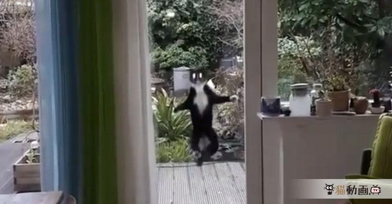 宇宙猫がすでに地球に侵入しているという証拠動画がこちらになります。