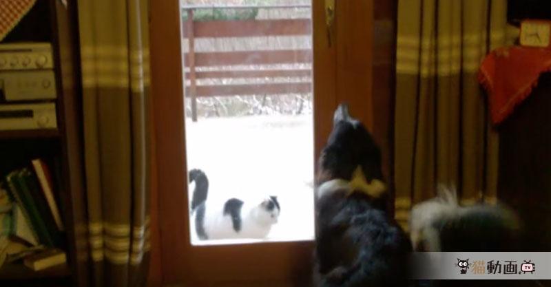 猫ちゃんが帰ってくるとドアを開けて迎えてくれるジェントルな犬さん