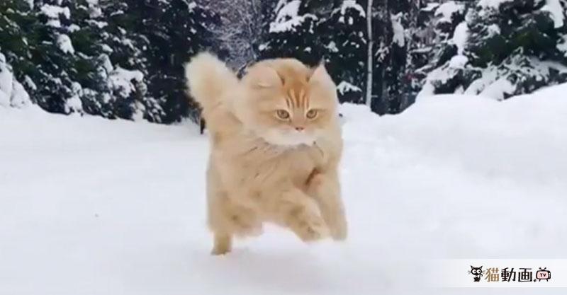(* ・`д・´)‼︎マッハで走り抜ける猫さんの速さに目が追いつきません ‼︎(`・д´・ *)