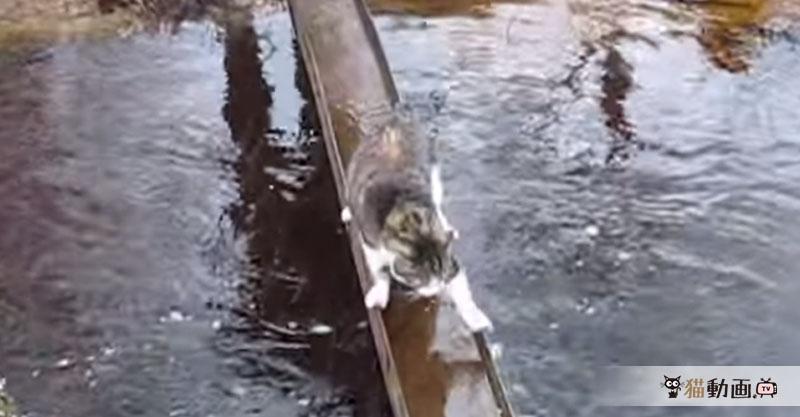 橋が渡れない……それなら端を渡ればいい! 一休猫さん現るヽ(=´▽`=)ノ