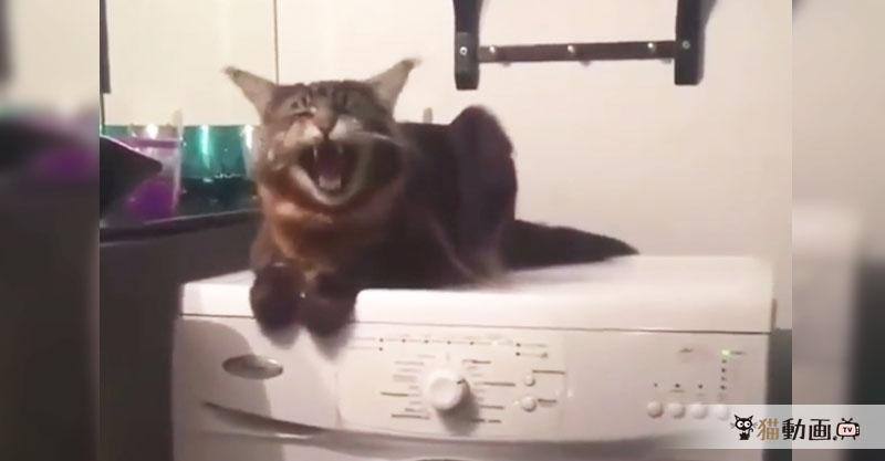 """あ""""あ""""あ""""あ""""あ""""……洗濯機の振動を楽しんでいる様子の猫さん"""