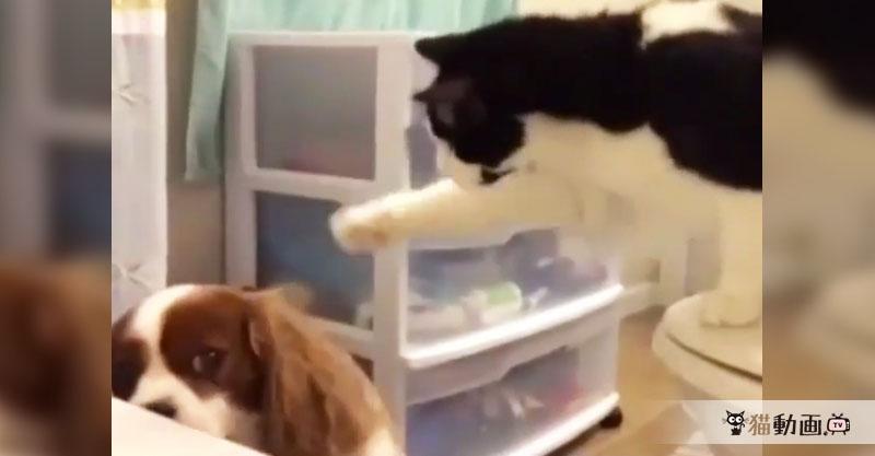 猫ちゃんとワンちゃんのじゃれ合い……いや、猫パンチ詰め合わせ動画です(笑)