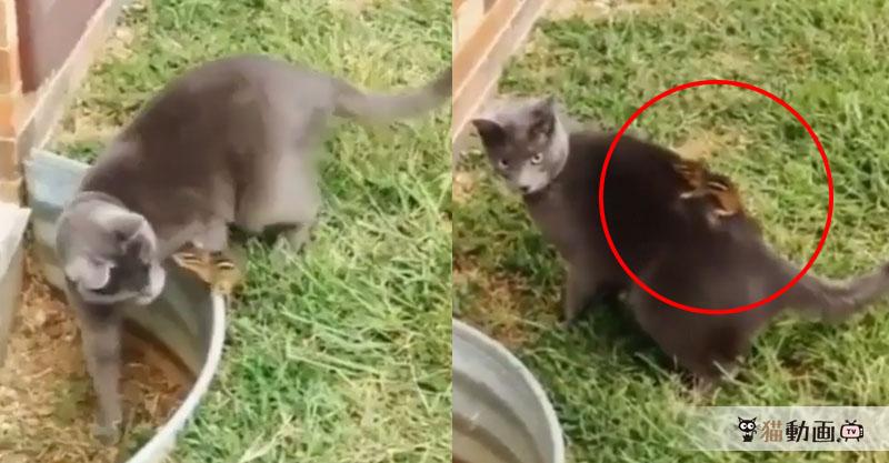 リスさんが消えた!? びっくりすしてオロオロする猫さんが( ´艸`)