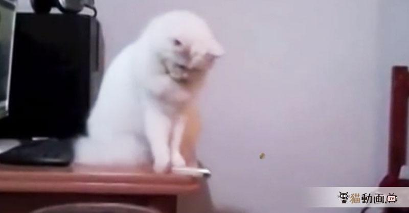 いる物といらない物を認識してゴミ箱へシュートする賢い猫さん!