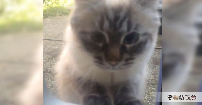窓に駆け寄る猫さんの勢いがすごい! 窓ガラスに注意ですよ💦