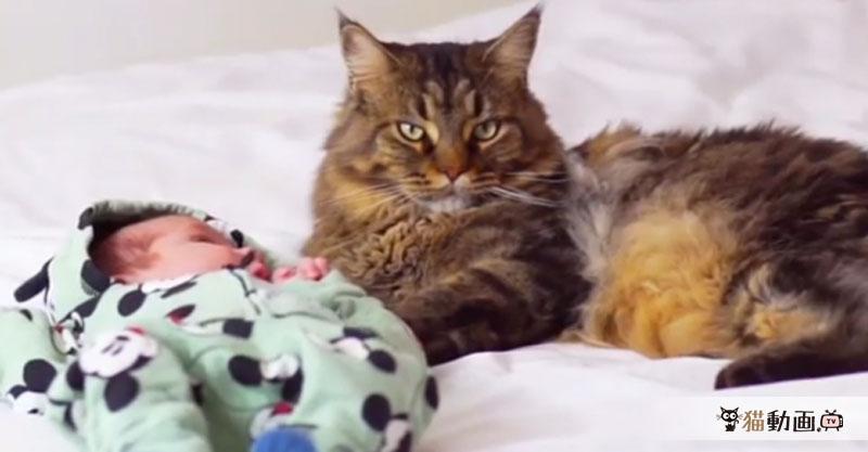 赤ちゃんを見守る猫さんのキリッとした顔に、貫禄を感じます