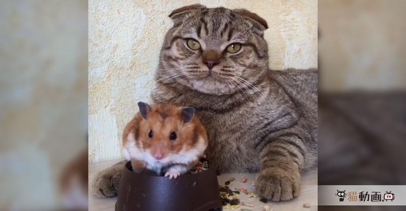 ちょっ、え…あれ…(´•ω•`)  戸惑っている猫さんの表情がいいです✨