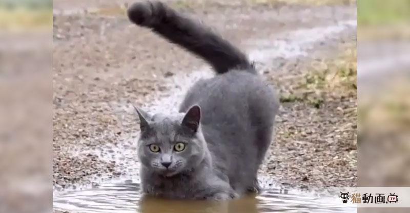 なんだか凄い顔で水たまりをパシャパシャする猫さん、その理由って……?