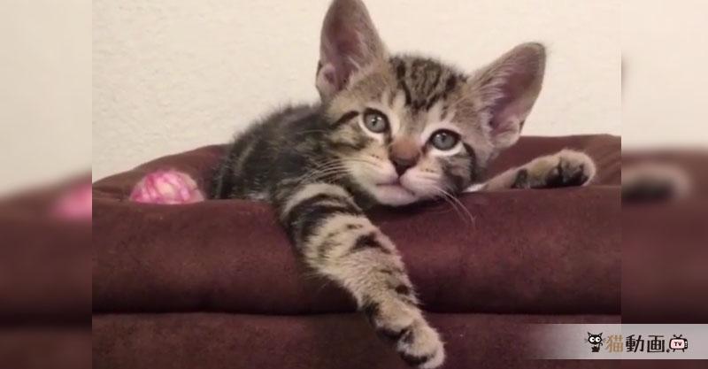 ひまだけど、動きたくないけど、どこかに連れていってほしそうな猫