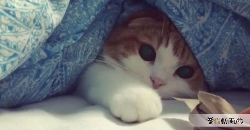 お布団から絶対に出ない猫ちゃんのモノグサ感がとっても癒されます✨
