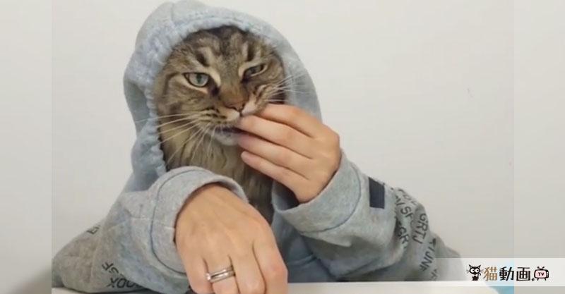 二人羽織でカリカリを食べる猫さん、これはまるでアノCM( ´艸`)