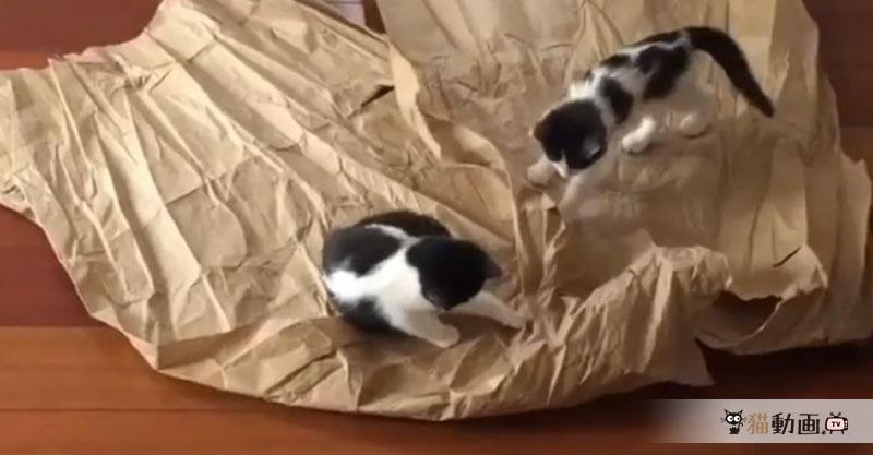 不要になった紙を床に置くと……子猫ちゃんたちが無邪気に楽しんでくれます✨