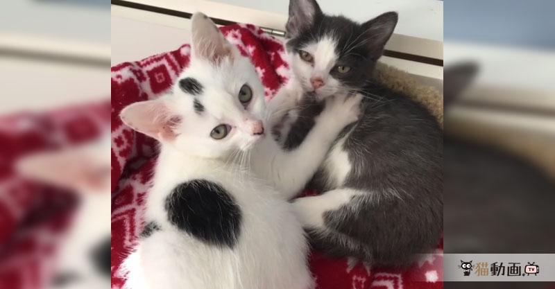 そんなに見つめないで(/ω\) 目線を外さずふみふみする猫ちゃんたち