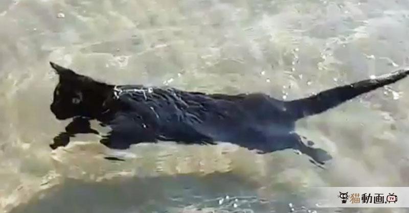 華麗な猫かき(*´∀`*) 海を優雅に泳ぐ猫さんが涼しげで気持ち良さそう!