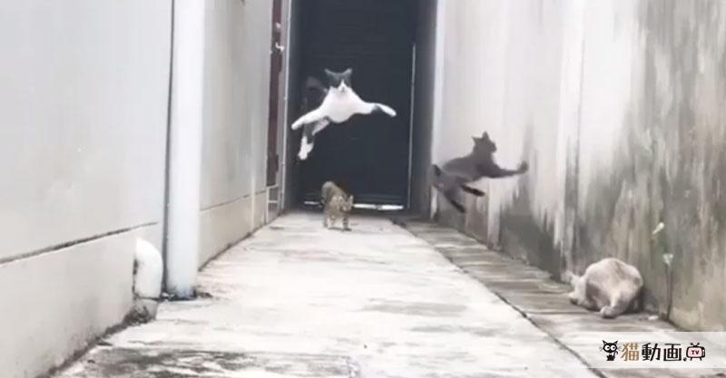 襲いかかる敵を華麗にかわし駆け抜ける猫さんがカッコよすぎます💕