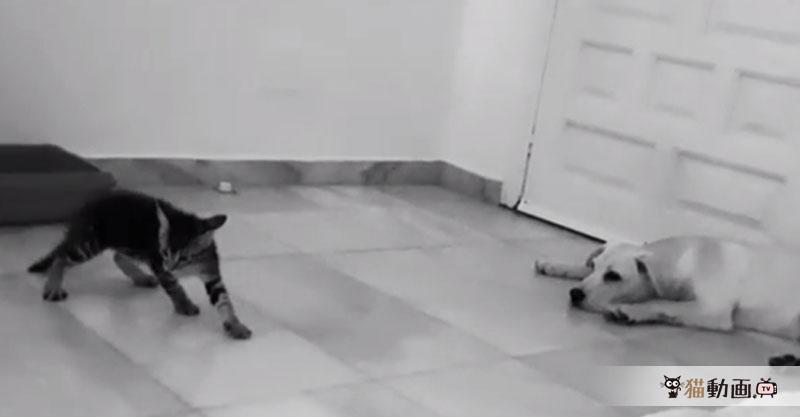 華麗なステップを踏む猫ちゃん、大物ダンサーの予感(≧∀≦)