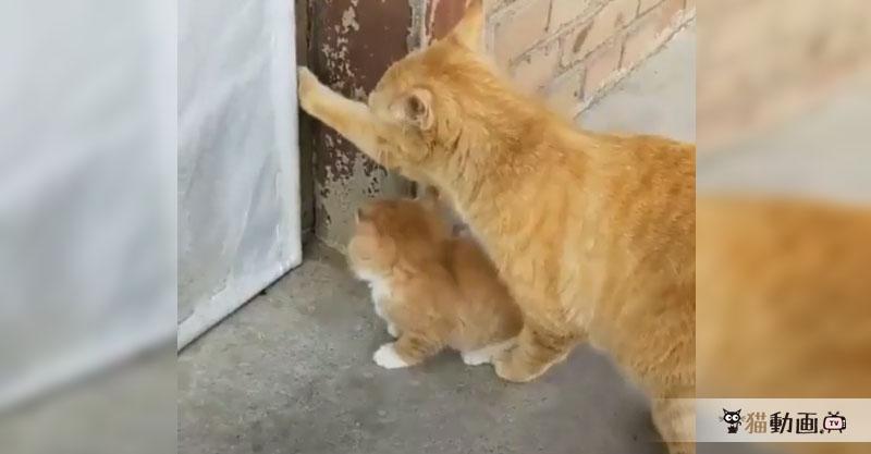 部屋に入ろうとドアをあけてあげる親猫さんですが……その結果はΣ(・□・;)