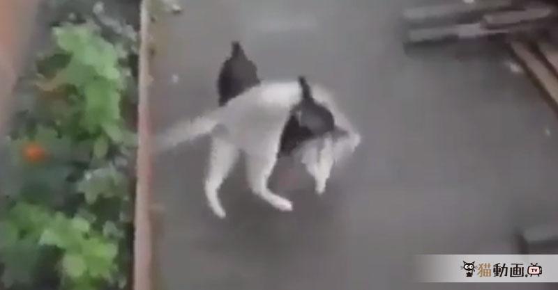 まったく自分で動く気のない猫を背中に乗せて移動する犬の怪