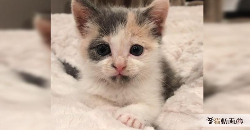 可愛い子猫ちゃんの顔にニヤニヤしていると、ビクッ!としますΣ(・ω・ノ)ノ