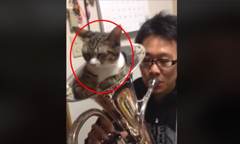 猫ちゃんで…サイレントミュート要らず(笑) 音が鳴った時の反応が(//∀//)