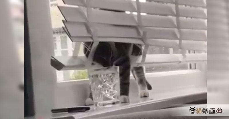 窓辺で水を飲む猫ちゃんという定番風景なのにおかしなことになっています