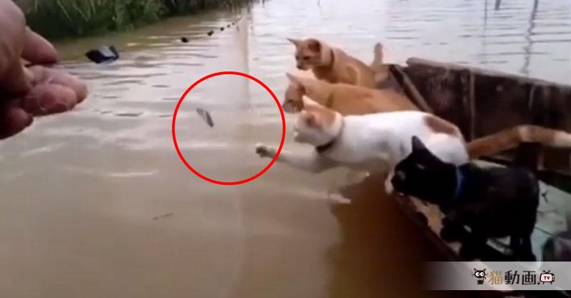 船から身を乗り出し獲れたての魚を手に入れようとする猫さんにハラハラ