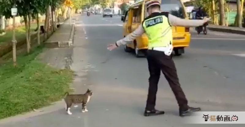 猫の国インドネシアでは猫が優雅に横断歩道を渡ります✨