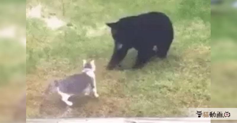 ある日庭先でクマさんに出会った猫さんの運命やいかに!?(>w< )