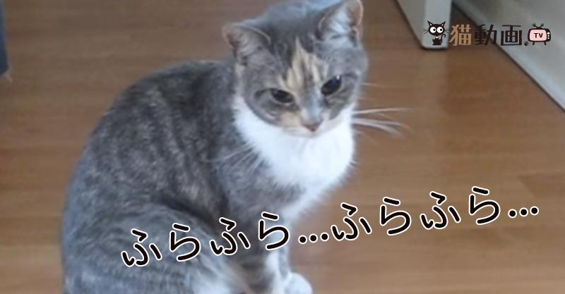 コテン…が可愛すぎる💕酔っ払い猫ちゃん!??いやいや実際は……(*´ω`*)