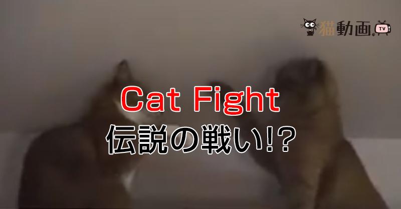 猫パンチの応酬!!伝説の猫ファイト!?COGNAC 対 B.J.の戦い。