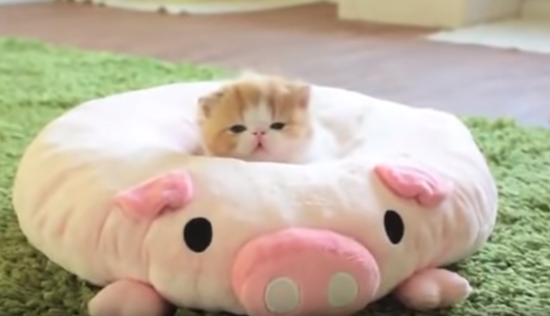 生まれたての赤ちゃん猫3匹トリオ🐱❤この最上級の可愛さにあなたは耐えられますか?(笑)