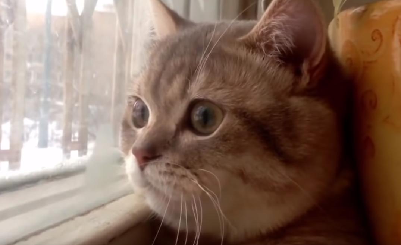 外を見つめながら鼻歌を奏でる猫ちゃん🐱♬
