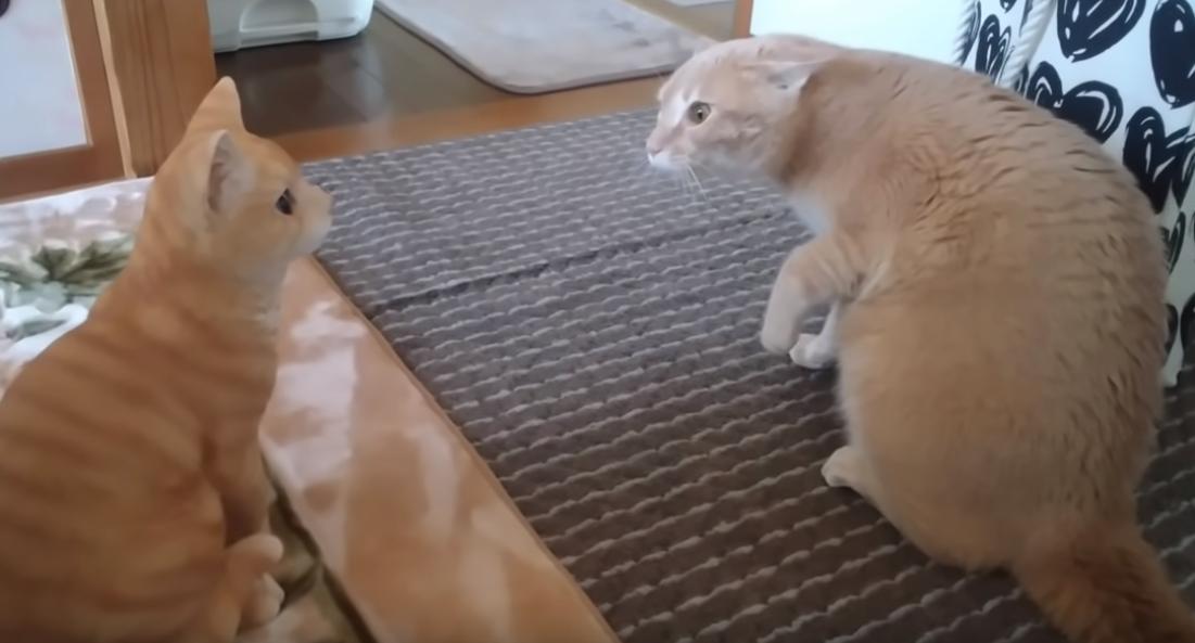 猫の置物に腰を抜かしてしまうシナモンちゃん🐱⚡