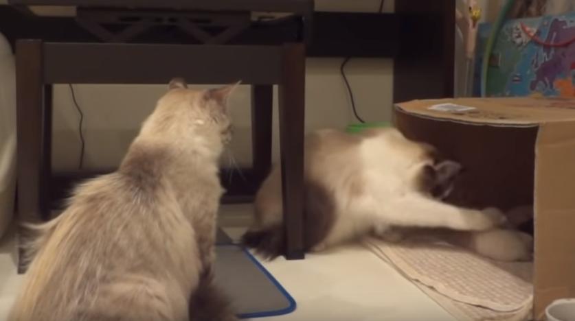 他の猫が子猫をずっといじくっていたら、母猫からの一撃必殺が( ゚Д゚)⚡